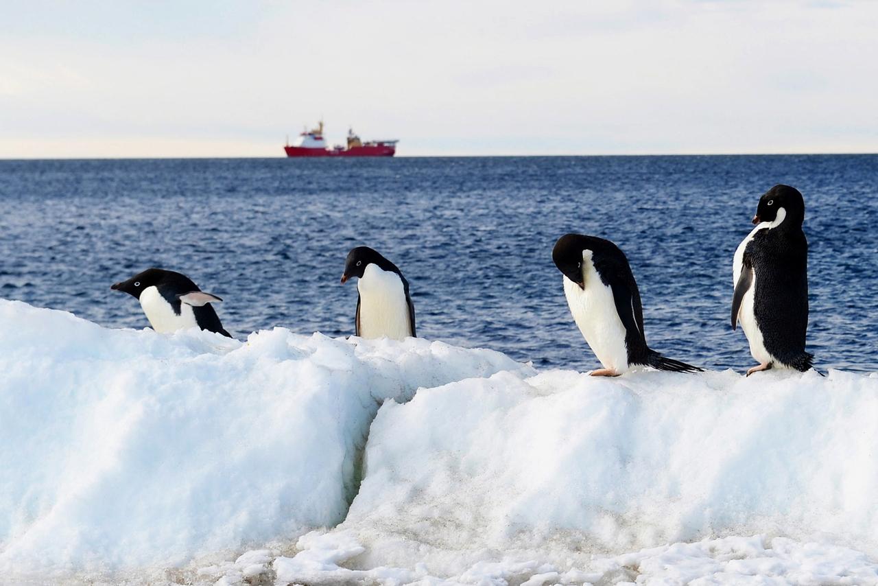 worlds-largest-marine-park-created-in-antarctic-ocean-09
