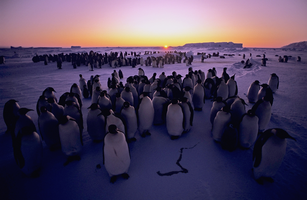 worlds-largest-marine-park-created-in-antarctic-ocean-13