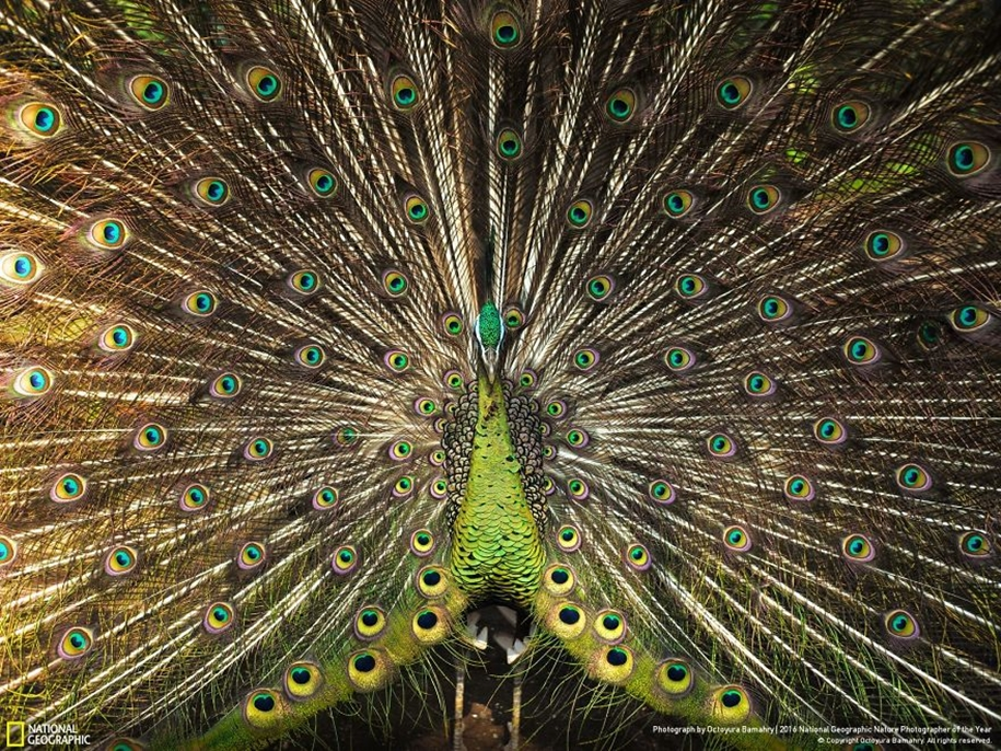 national-geographic-nature-photographer-of-the-year-2016_25