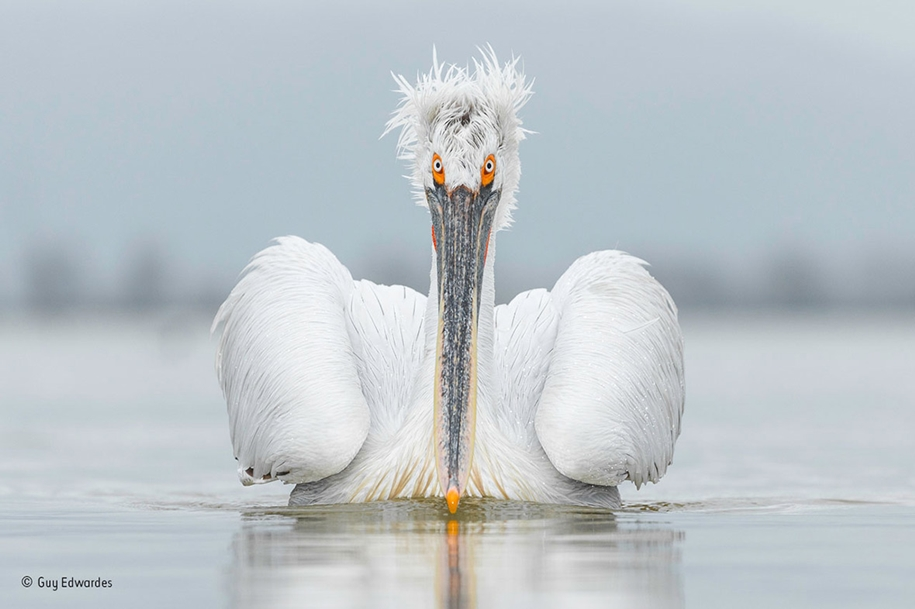 wildlife-photographer-year-2016-04