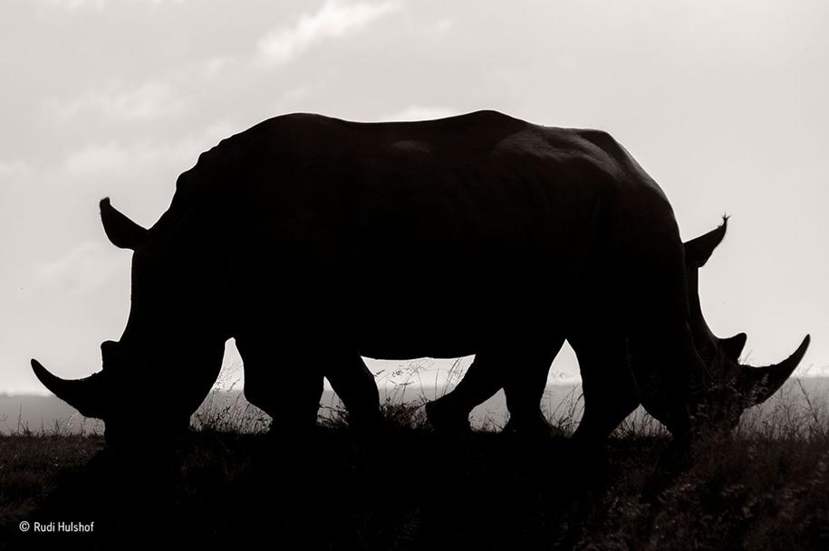 wildlife-photographer-year-2016-06