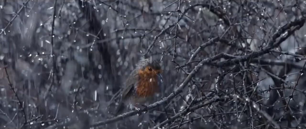 Трогательное видео о силе духа и любви к близким