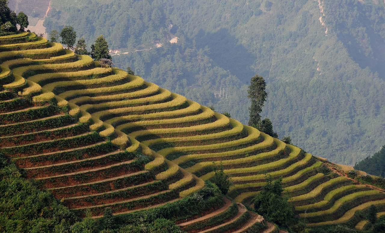 amazing-rice-terraces-01