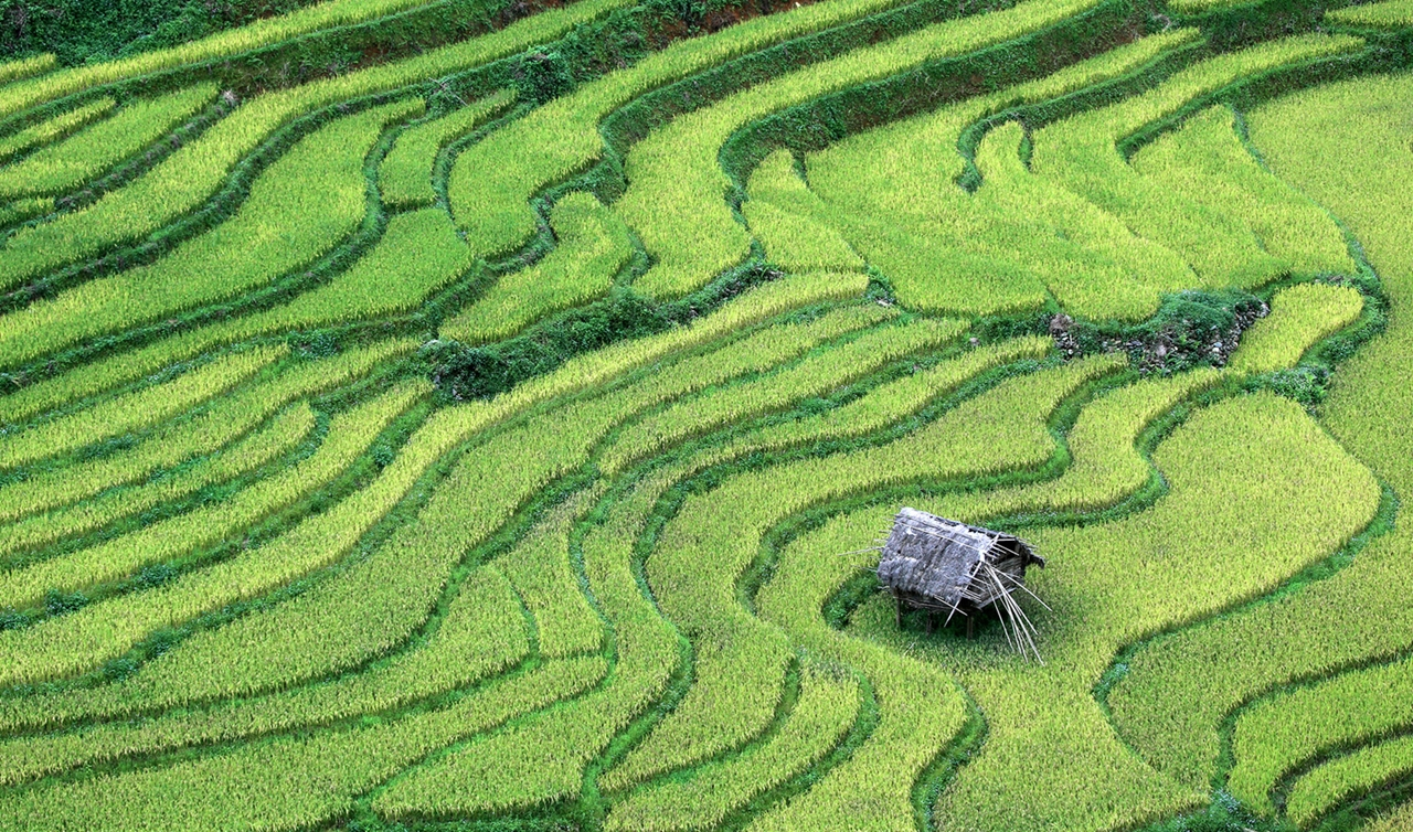 amazing-rice-terraces-03