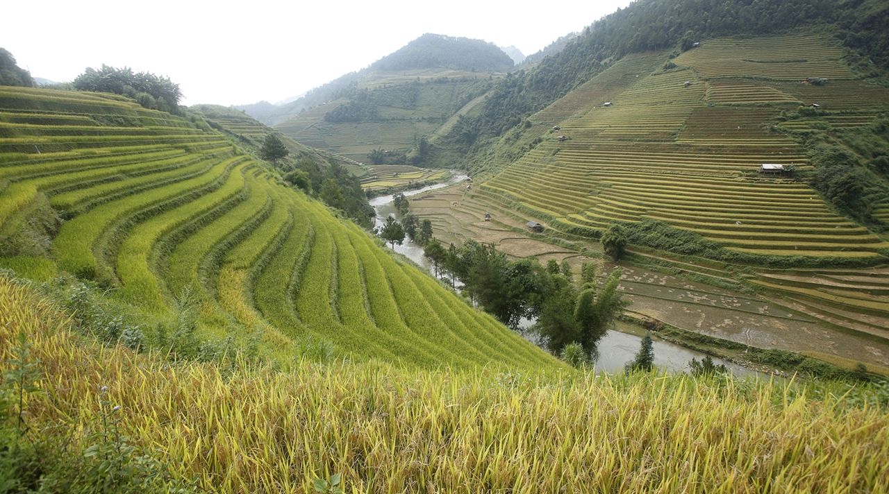amazing-rice-terraces-04