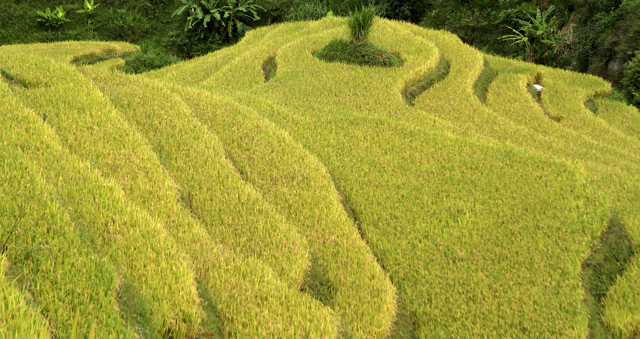 amazing-rice-terraces-07