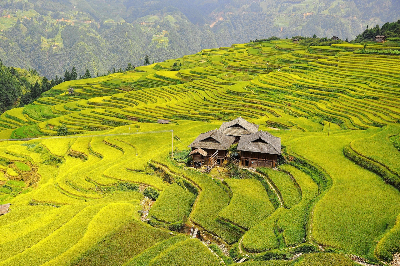 amazing-rice-terraces-12