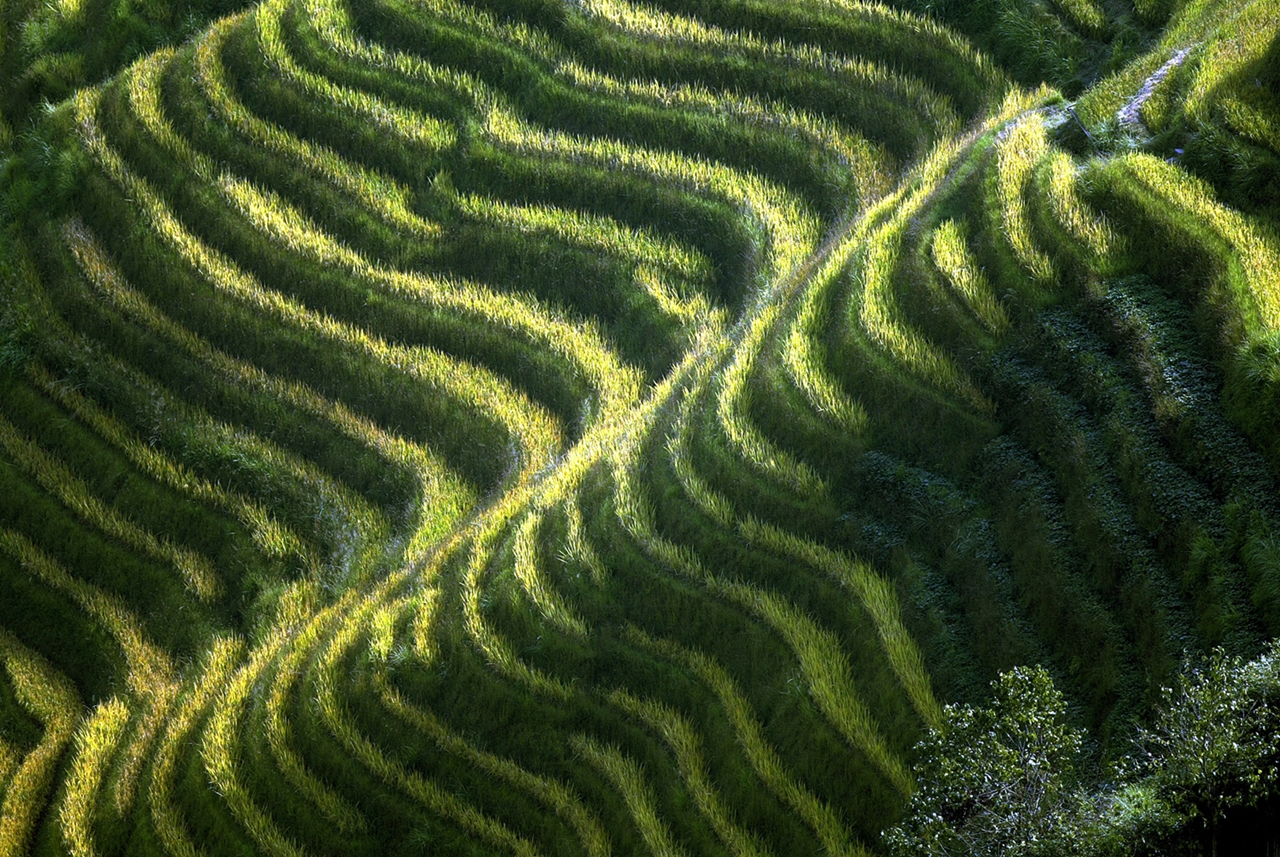 amazing-rice-terraces-15