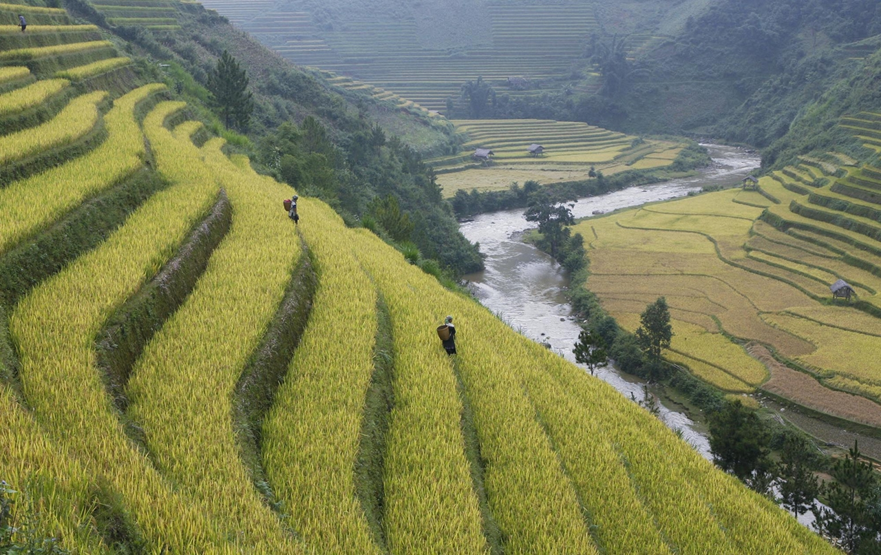 amazing-rice-terraces-17