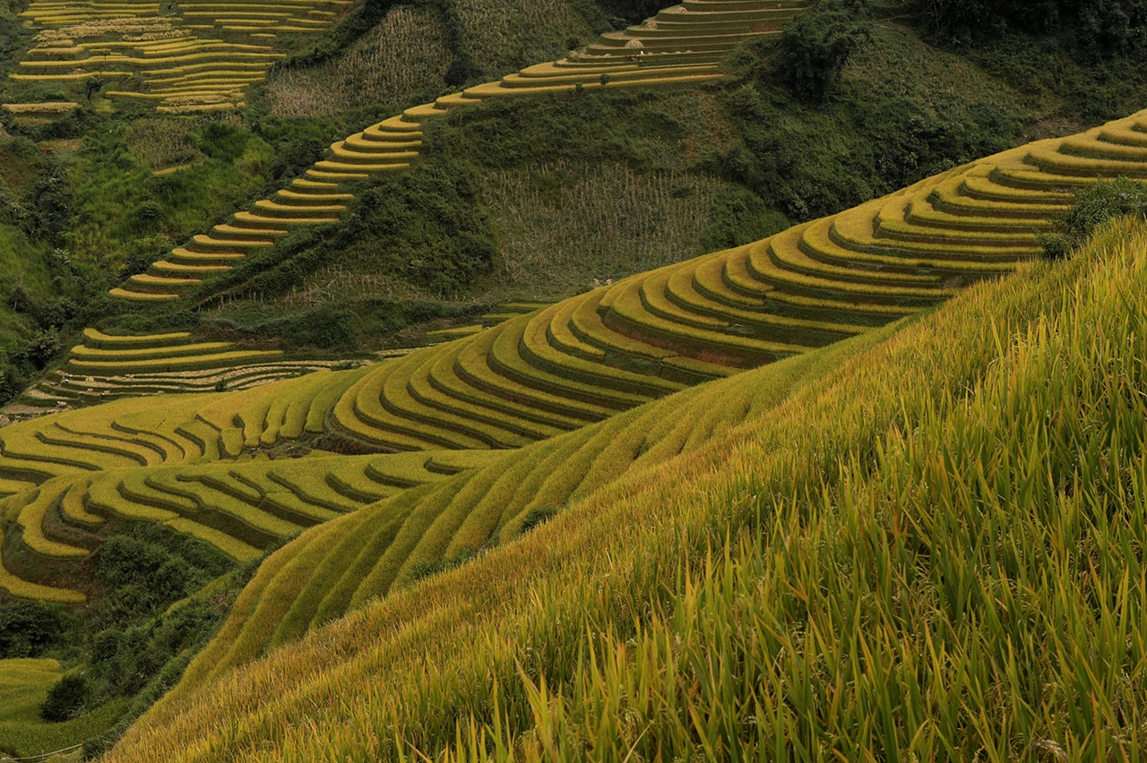 amazing-rice-terraces-22