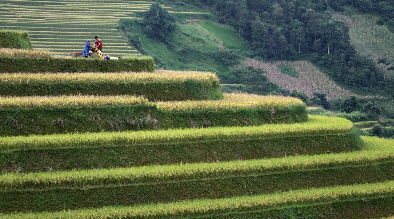 amazing-rice-terraces-23