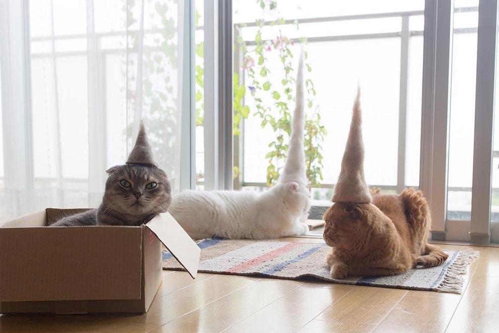 Милые котики в шляпах, сделанных из их собственной шерсти