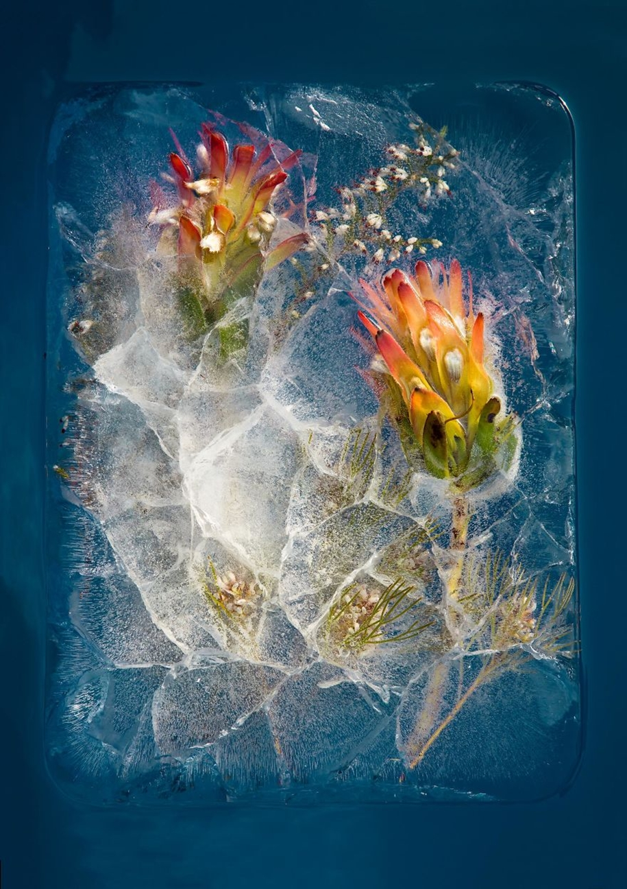 frozen-flowers-in-a-still-life-by-bruce-boyd-02
