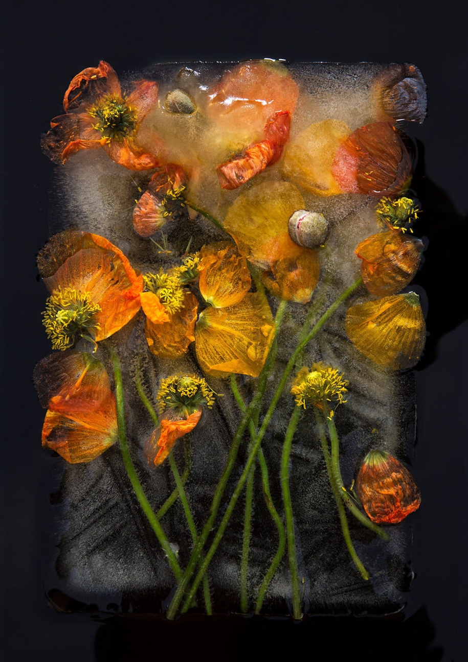 frozen-flowers-in-a-still-life-by-bruce-boyd-03