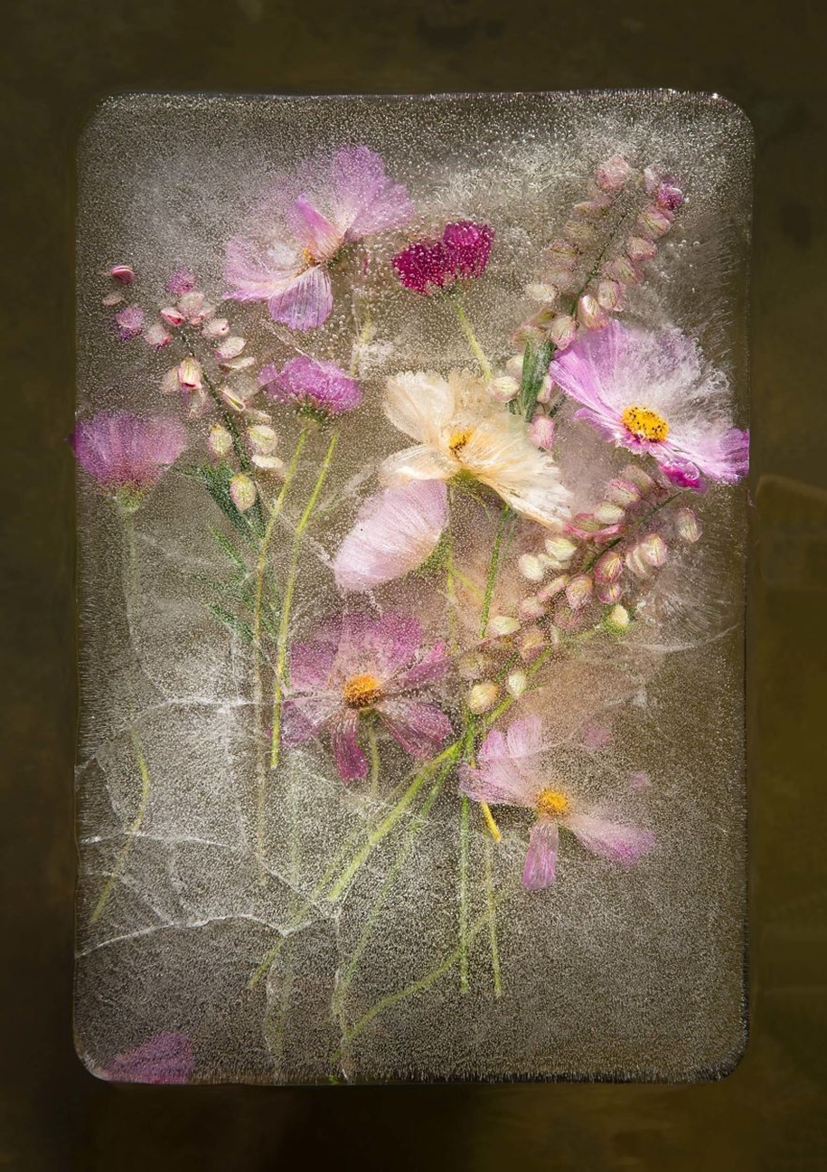 frozen-flowers-in-a-still-life-by-bruce-boyd-09