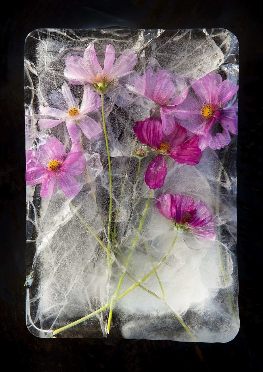 frozen-flowers-in-a-still-life-by-bruce-boyd-12