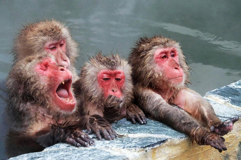 japanese-macaque-opened-the-season-bathing-in-hot-springs-02