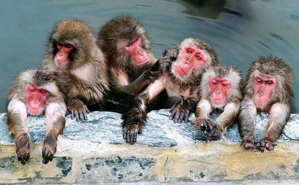 japanese-macaque-opened-the-season-bathing-in-hot-springs-08