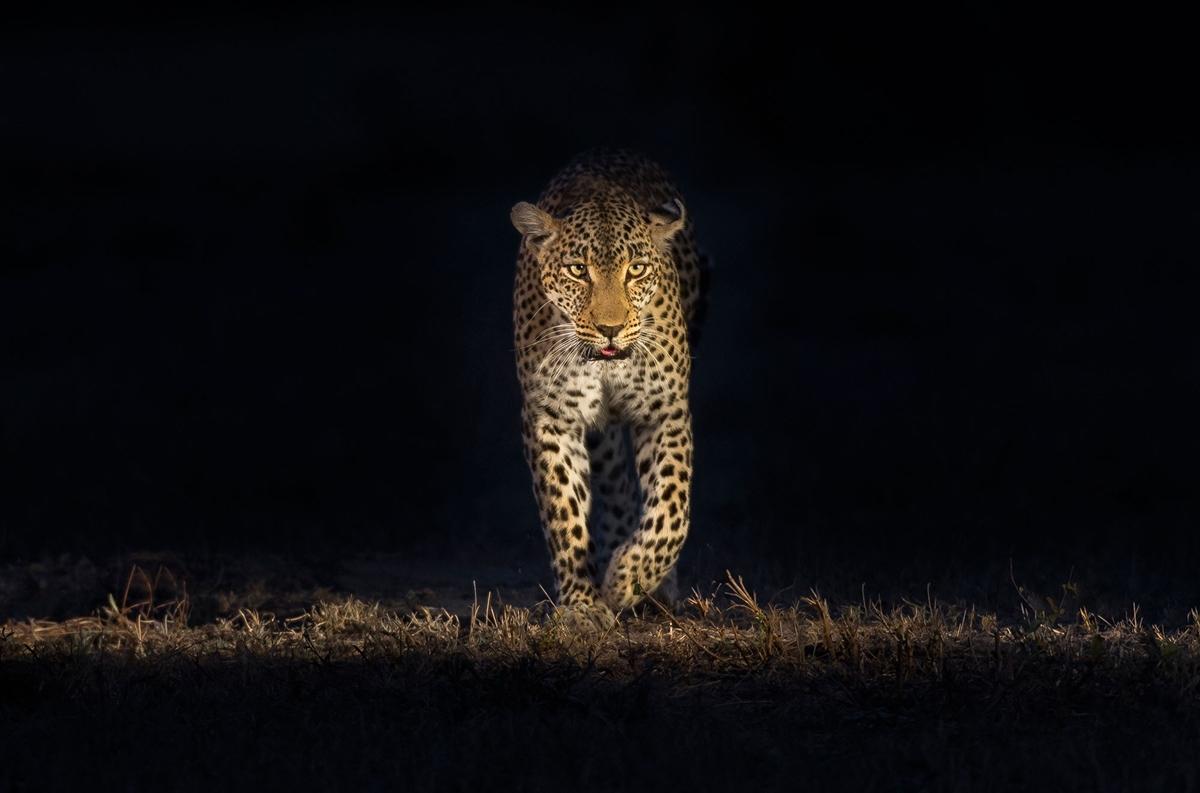 Ночное сафари