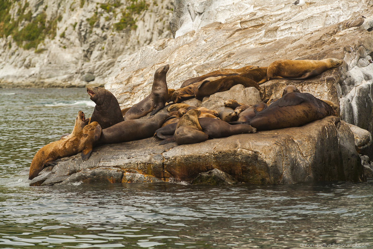 of-the-pacific-ocean-sea-lions-06