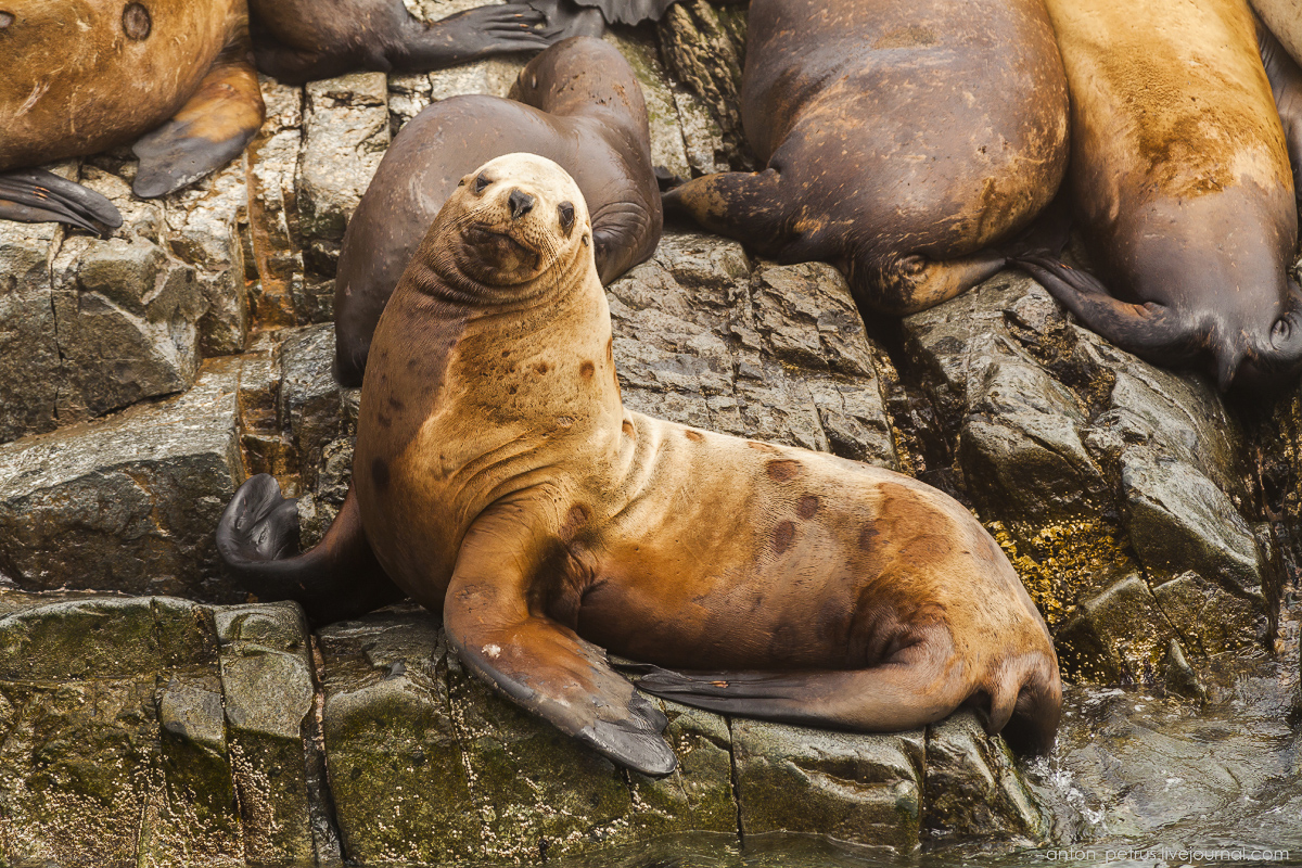 of-the-pacific-ocean-sea-lions-09