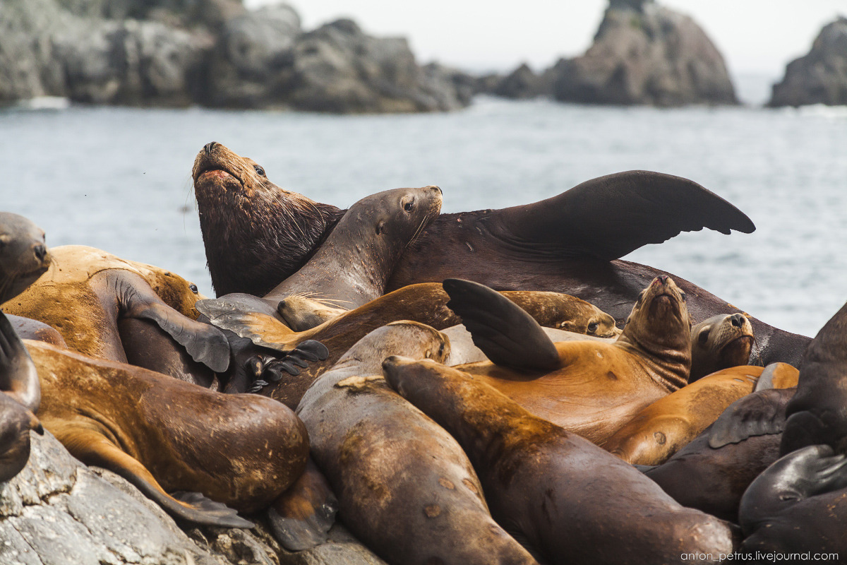of-the-pacific-ocean-sea-lions-11