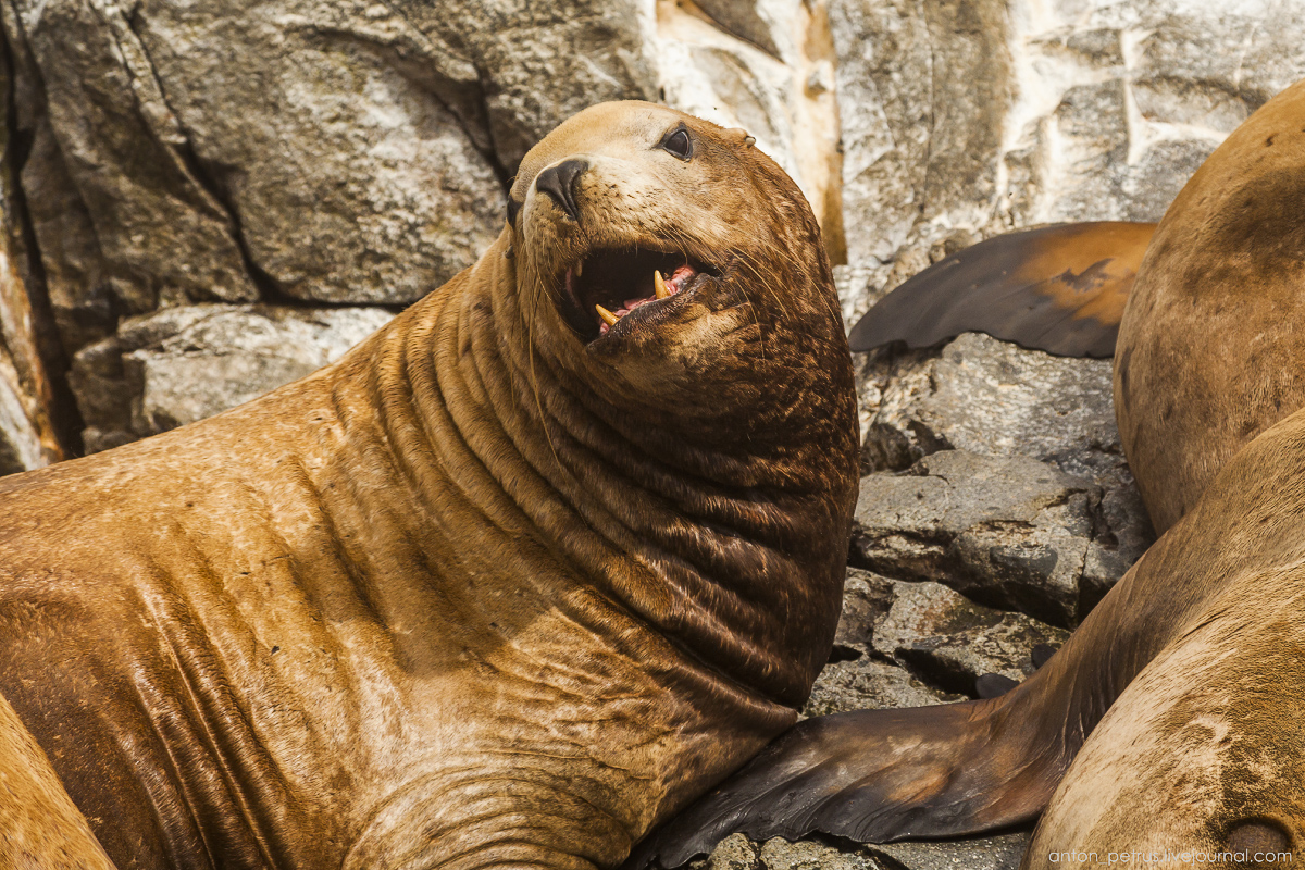 of-the-pacific-ocean-sea-lions-12