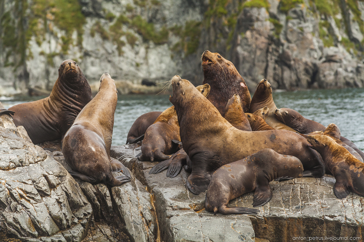 of-the-pacific-ocean-sea-lions-13