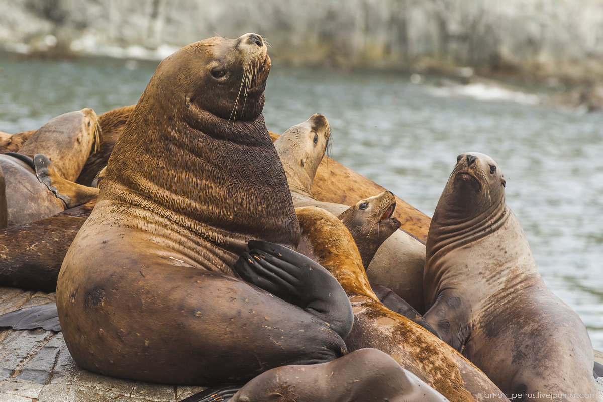 of-the-pacific-ocean-sea-lions-14