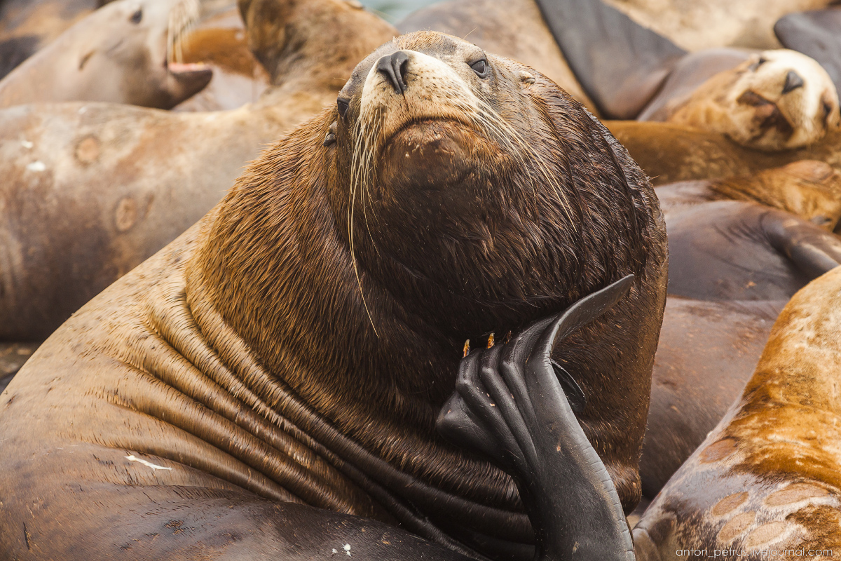 of-the-pacific-ocean-sea-lions-15