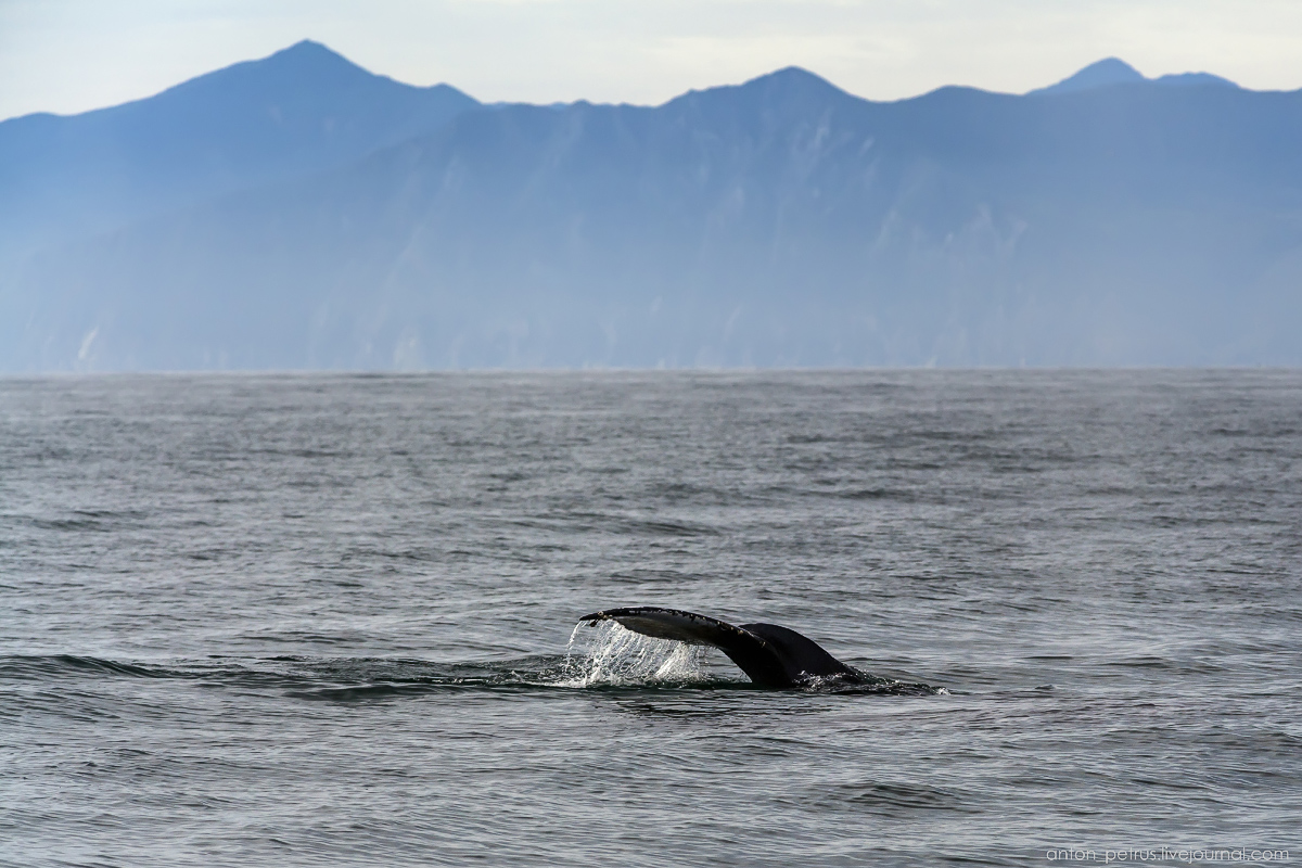 of-the-pacific-ocean-whales-and-their-enemies-03