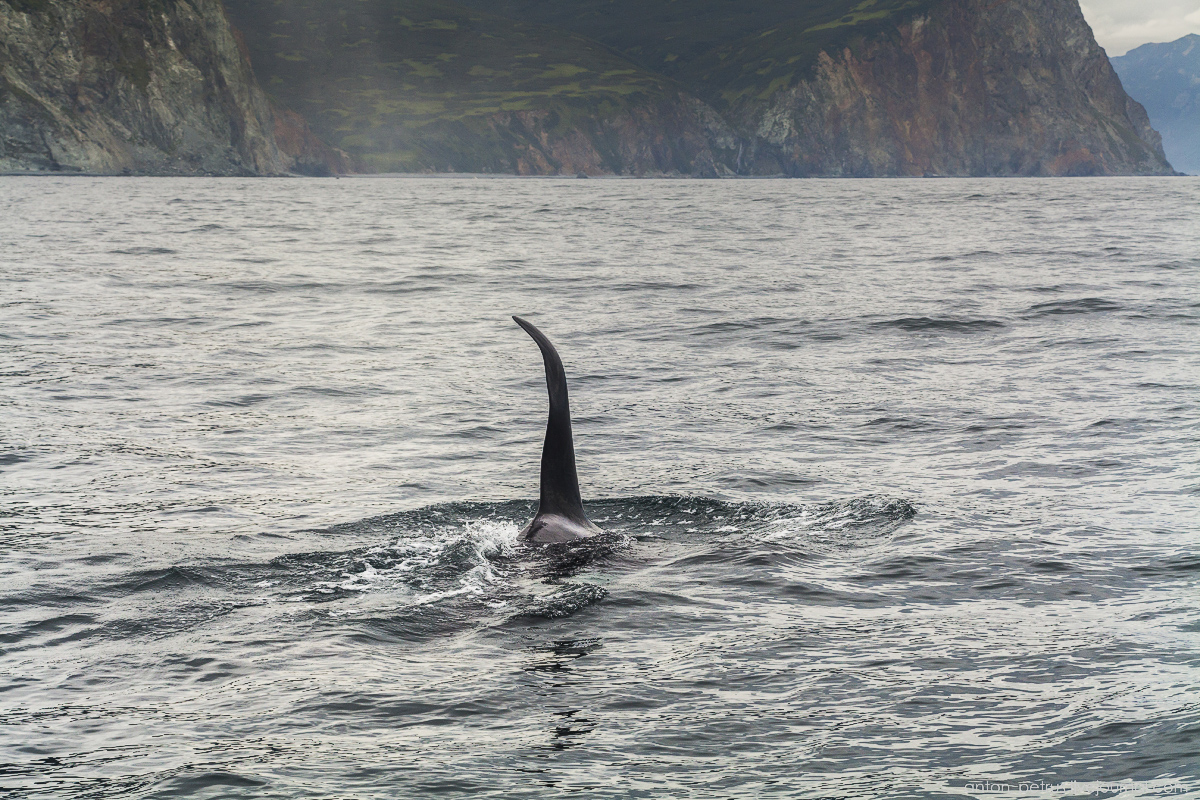 of-the-pacific-ocean-whales-and-their-enemies-10
