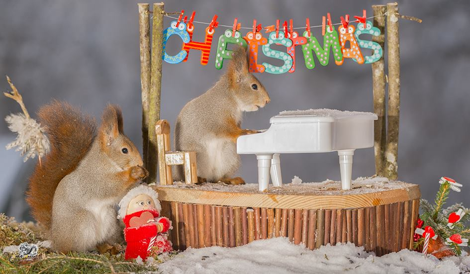 Белки Гирта Веггена в рождественской фотосессии