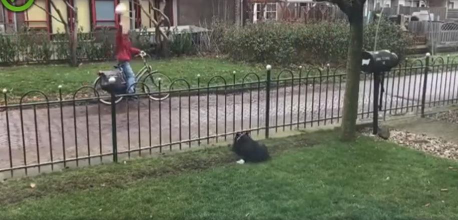 Умная собачка нашла простой способ, чтобы играть весь день
