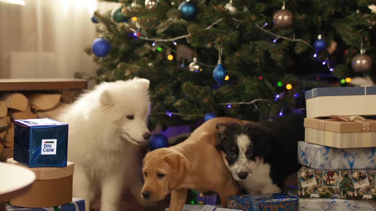 Самое пушистое поздравление в уходящем году от Dog Chow