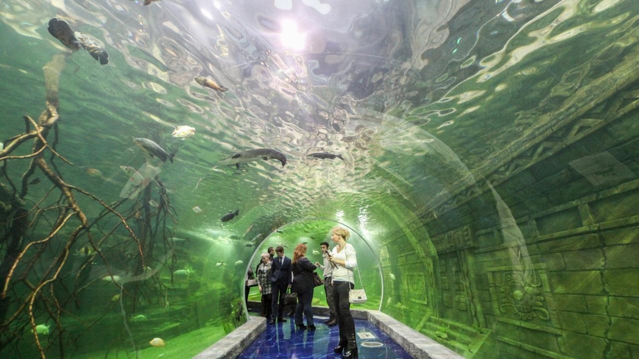 Крупнейший дайвинг-центр и океанариум в России