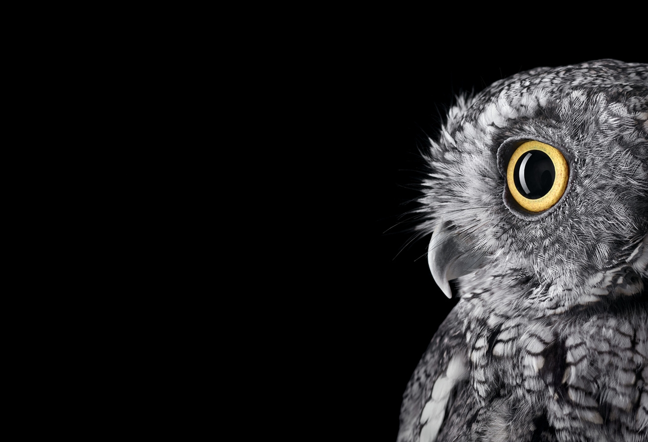 the-most-mysterious-birds-in-the-portraits-brad-wilson-00