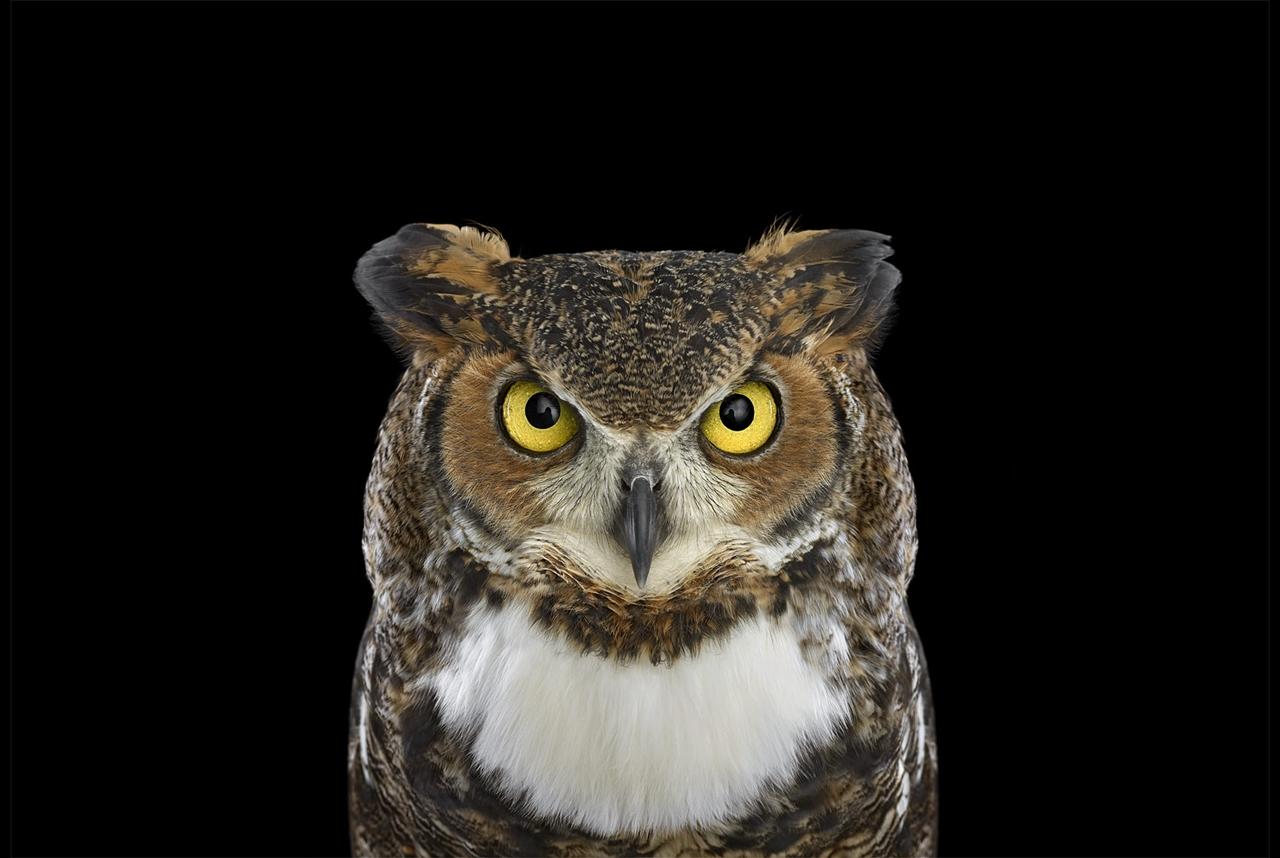 Самые мистические птицы в фотопортретах Брэда Уилсона