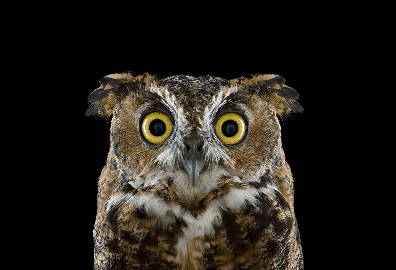 the-most-mysterious-birds-in-the-portraits-brad-wilson-01