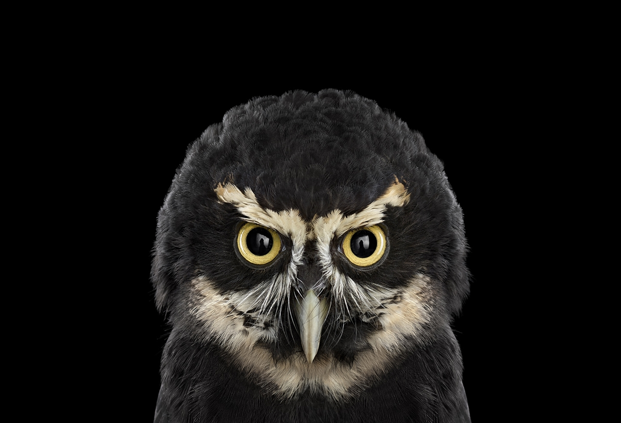 the-most-mysterious-birds-in-the-portraits-brad-wilson-02