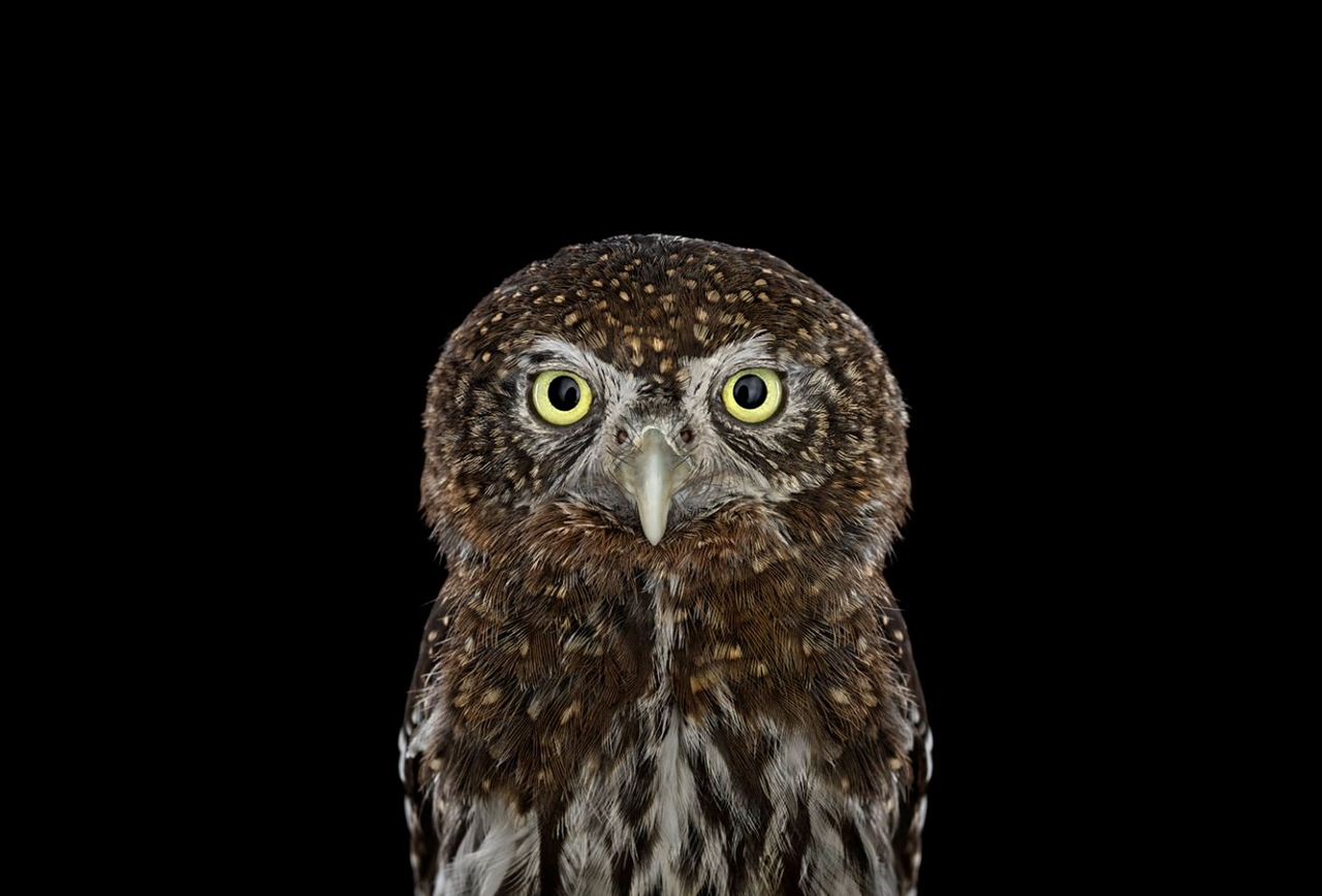 the-most-mysterious-birds-in-the-portraits-brad-wilson-04