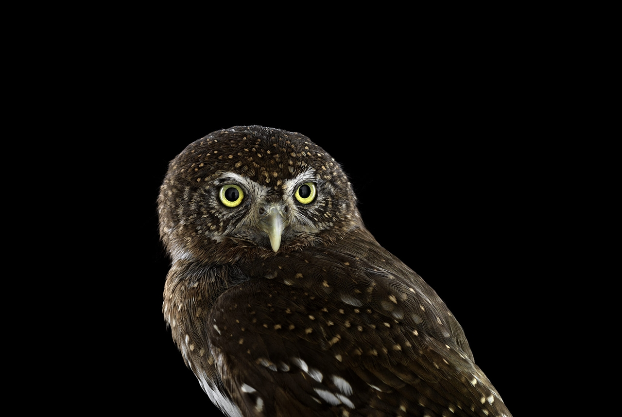 the-most-mysterious-birds-in-the-portraits-brad-wilson-05