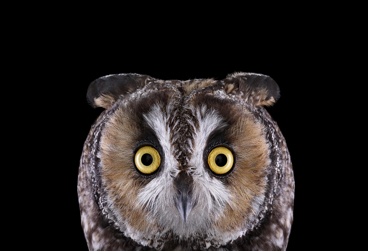the-most-mysterious-birds-in-the-portraits-brad-wilson-06