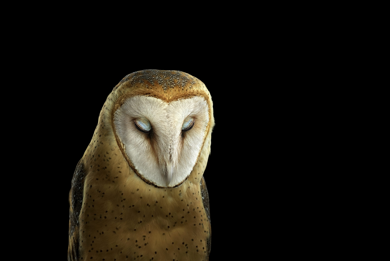 the-most-mysterious-birds-in-the-portraits-brad-wilson-07