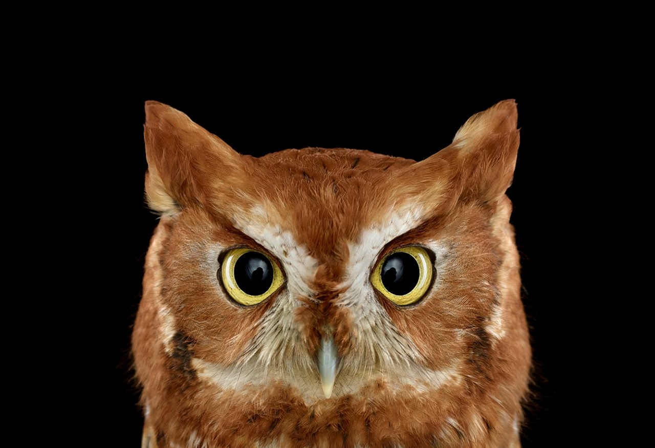 the-most-mysterious-birds-in-the-portraits-brad-wilson-08