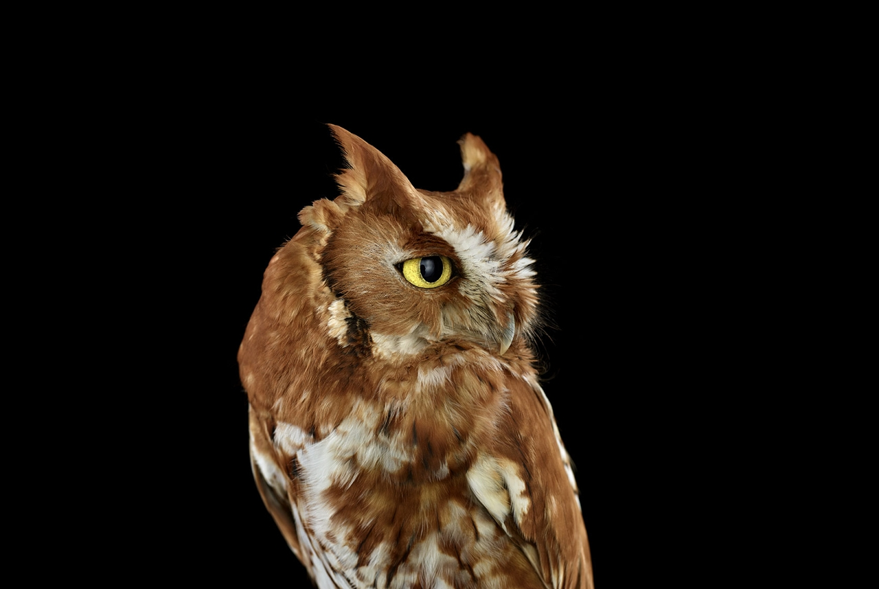 the-most-mysterious-birds-in-the-portraits-brad-wilson-09