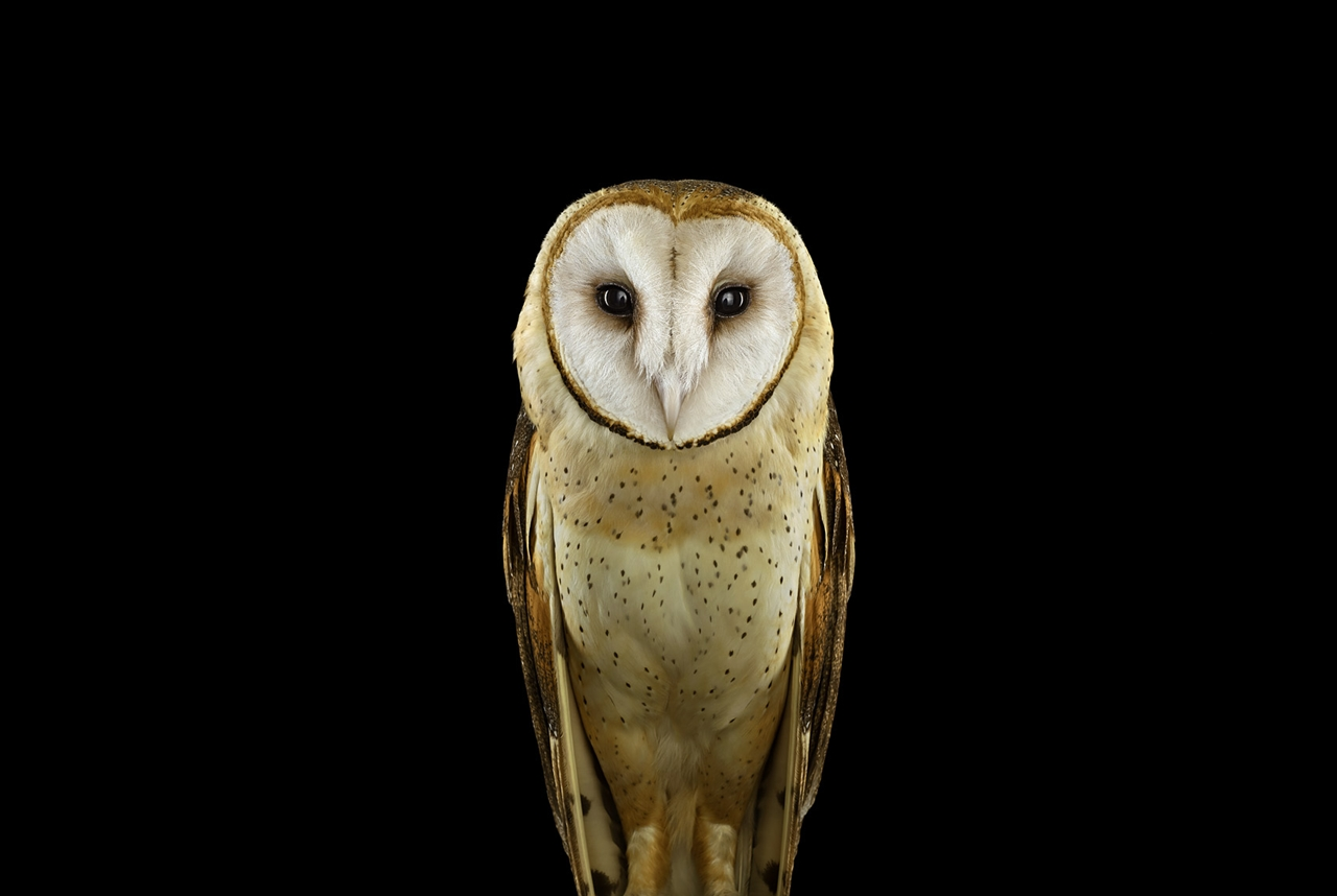 the-most-mysterious-birds-in-the-portraits-brad-wilson-10