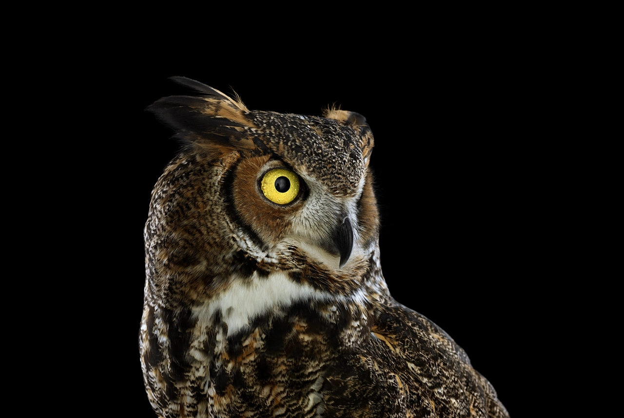 the-most-mysterious-birds-in-the-portraits-brad-wilson-11