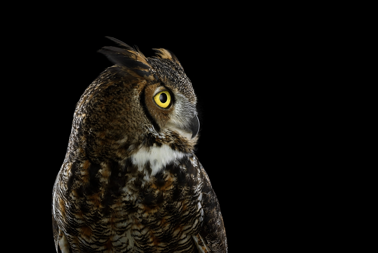 the-most-mysterious-birds-in-the-portraits-brad-wilson-12