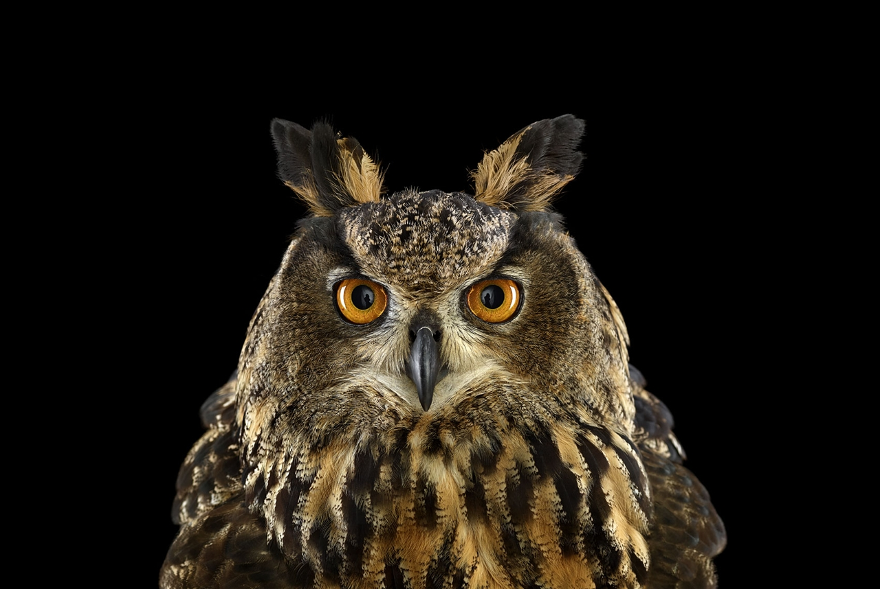 the-most-mysterious-birds-in-the-portraits-brad-wilson-13